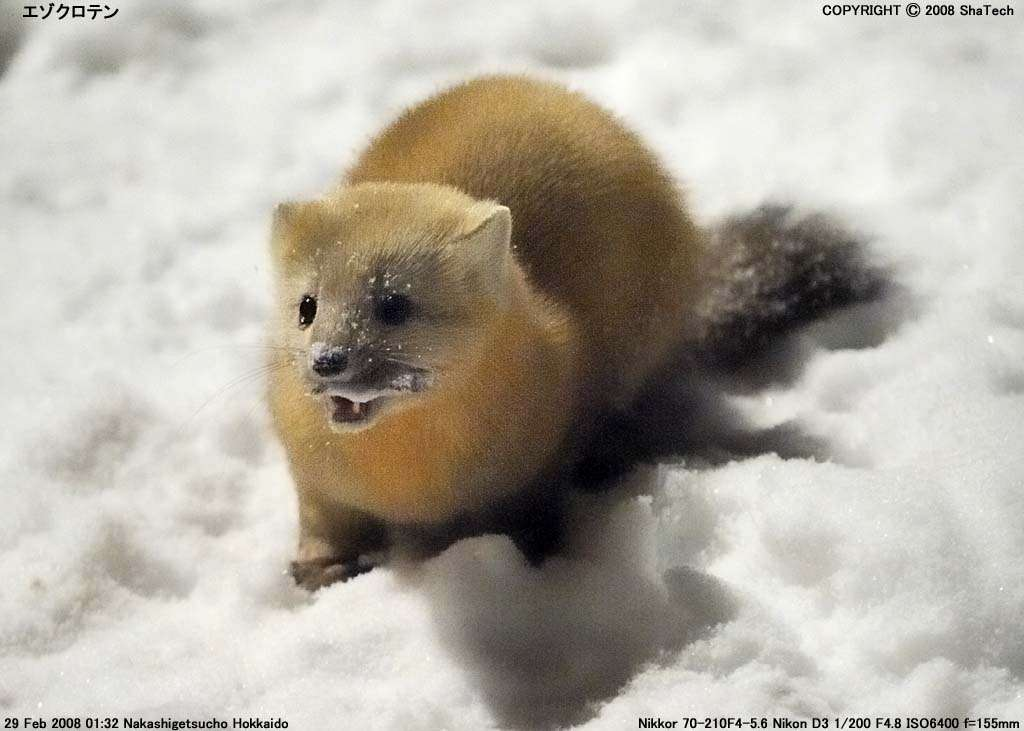 日本の野生動物の画像を貼るトピ