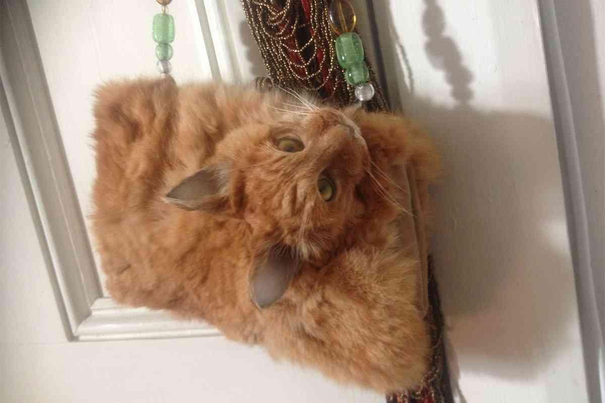 「事故死した猫の遺体は毛皮製品にしてよいか?」→出来上がったハンドバッグに賛否両論。 | World Action