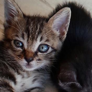 中川翔子(しょこたん)、捨て猫を保健所の譲渡会に連れて行った少女に大激怒→はるかぜちゃんも参戦 - NAVER まとめ