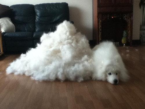 室内犬あるある