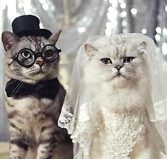 婚活をして結婚をされた方