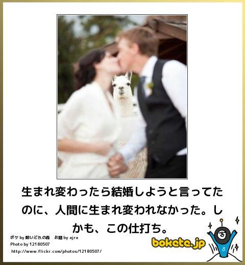 【大喜利】好きな芸能人と結婚する方法【LOVE】