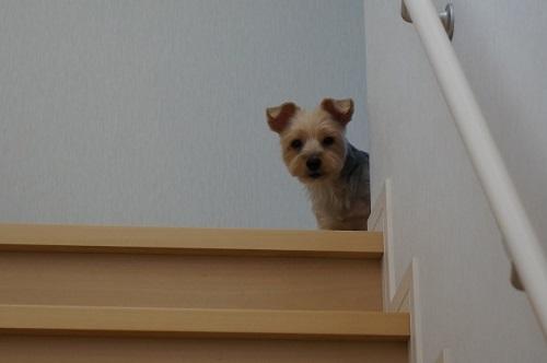教えてください!犬の留守番