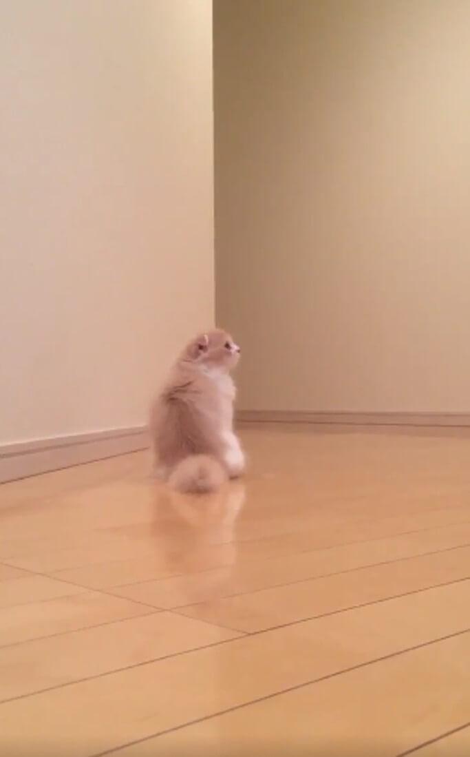 な、なにこれ…!飼い主の隠し撮りに気付いたネコがまさかの歩き方で逃げた(笑)