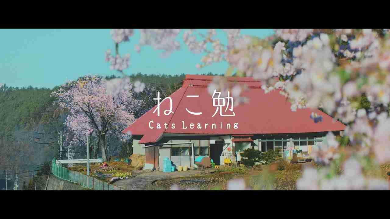 ねこ勉〜Cats Learning〜 - YouTube