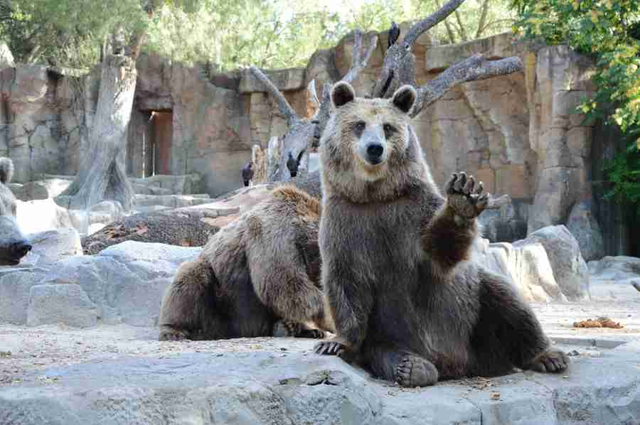動物画像で海外ドラマ風におしゃべりするトピ