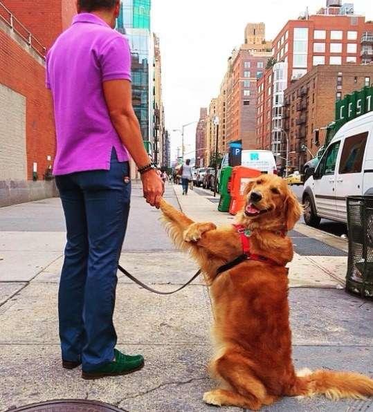 ハグが大好き!散歩中みんなにハグしちゃうゴールデン・レトリバー