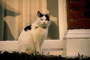 猫の毛色と性格
