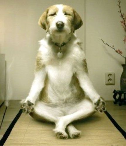瞑想してる人