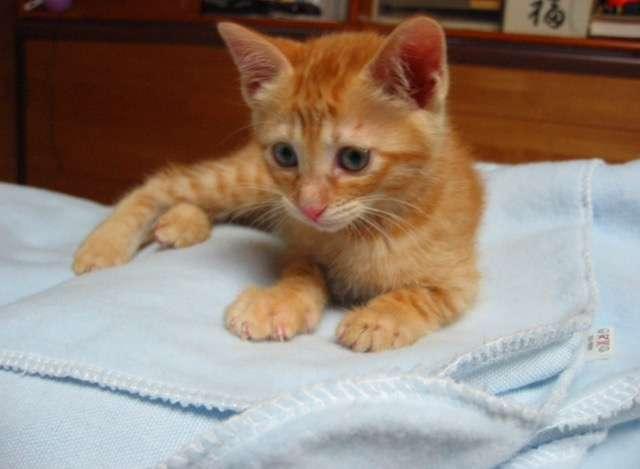 メス猫とオス猫どう違う?
