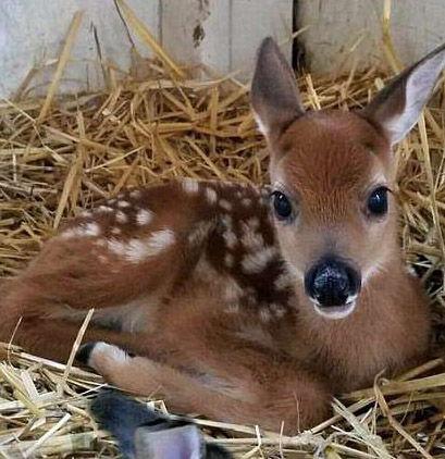 【ディズニーかよ】母親に捨てられた「バンビ」まさかの「あの生物」と一緒に暮らす