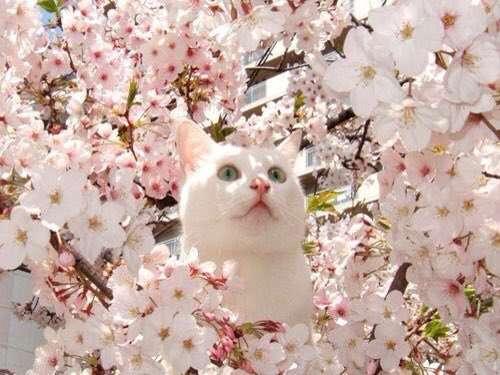 【雑談トピ】春が待ち遠しい人〜