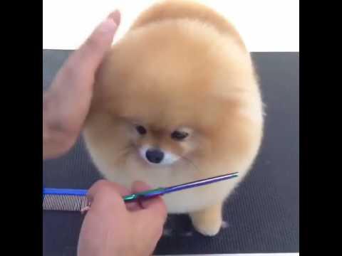 Cute dog haircut - YouTube