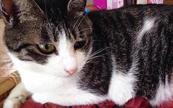 「うちの猫が最大限にやらかした事件です」満足げに座る猫、しかし足元には
