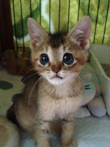 「カラスに襲われ舌が裂けた子猫を保護しました」 | ライフスタイル | マイナビニュース