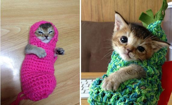 【87日間を懸命に生きた猫】「わさびちゃん」の短い生涯(まとめ) - FEELY