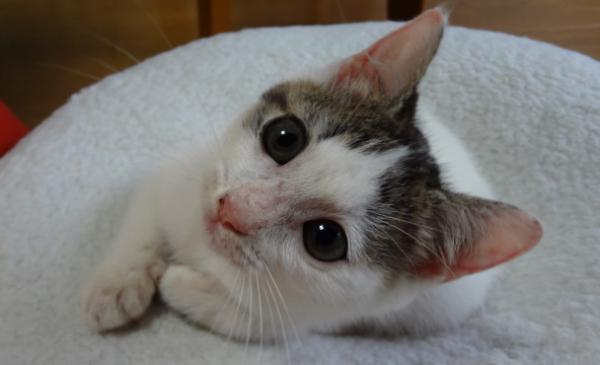 国道の中央分離帯の草むらでカラスに襲われていた子猫を救出したものの。。 - Spotlight (スポットライト)