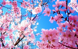 春といえば?