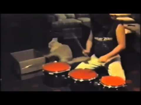 主人と一緒にドラムのセッションする猫 - YouTube