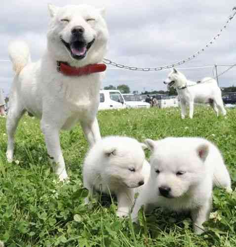 日本犬の画像貼りましょう