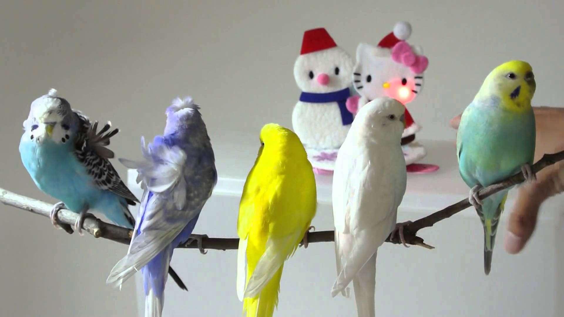 鳥カフェ倶楽部