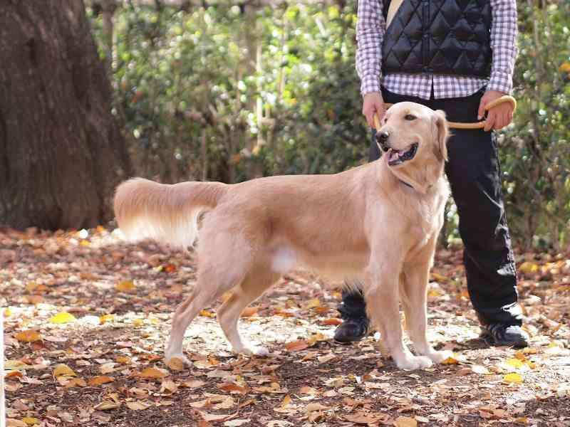 10カ月の女児、飼い犬にかまれ死亡 東京・八王子