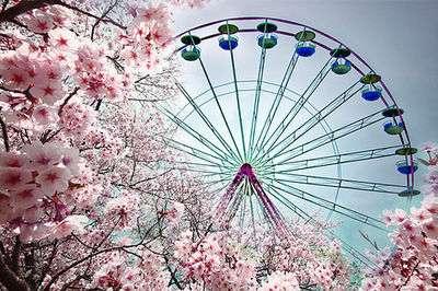画像 : 桜開花『おしゃれすぎる桜』画像 - NAVER まとめ