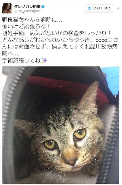 ダレノガレ明美が、保護した野良猫を病院へ連れて行くと…思わぬ事実が判明!