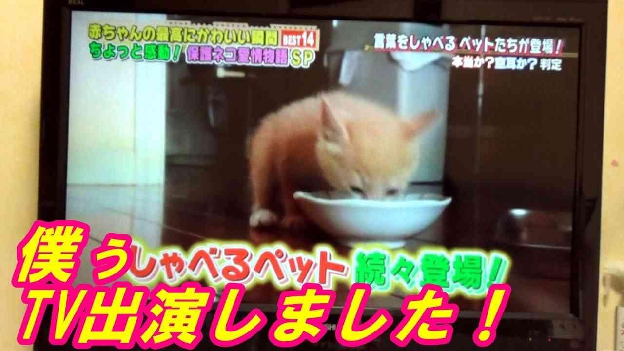 ♂猫だいずがTV初出演しました! 『どうぶつピース!!』TV東京系 - YouTube