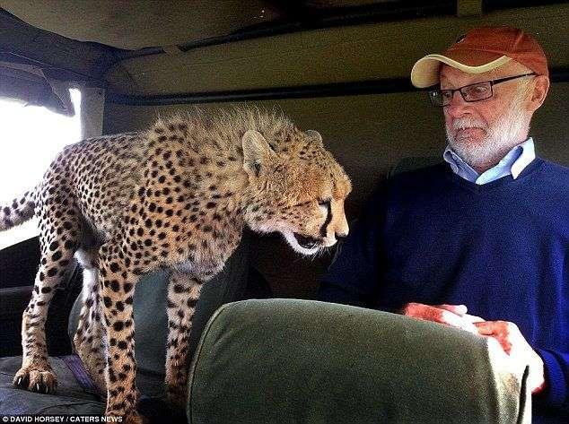 【恐怖】怖えぇ!動物に人間は勝てないと悟った瞬間の写真が話題に。