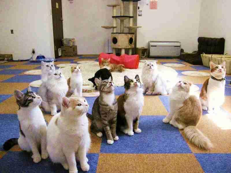 クラスに一人はいた人!を動物画像で教えて