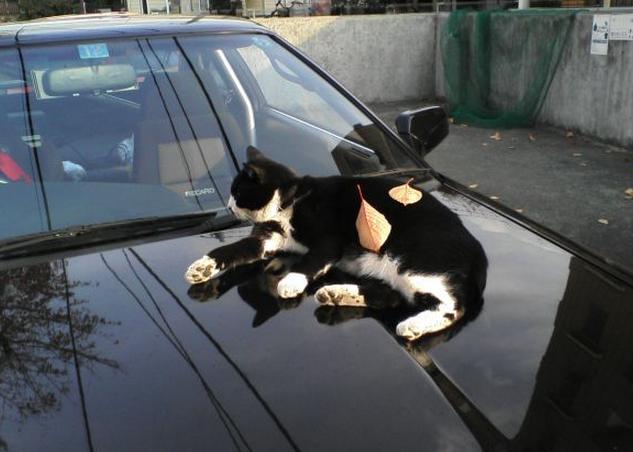 野良猫の被害にあっている(あっていた)かたいますか?