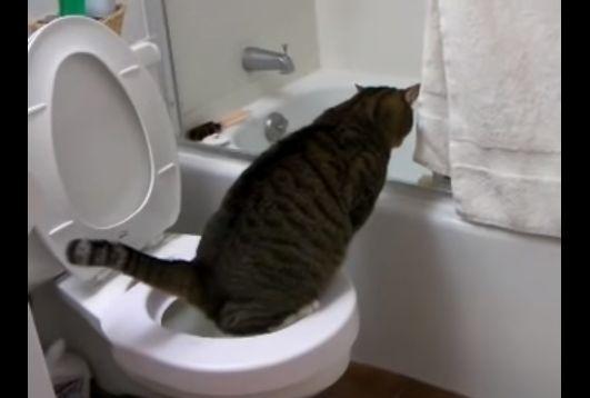 トイレの長い人