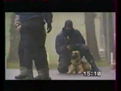 Tactical K-9 Police dogs in action - YouTube