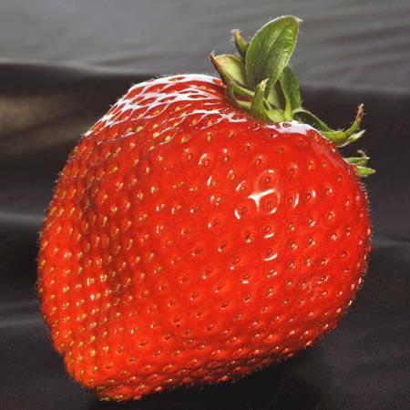なんとイチゴ、1粒5万円っ!高級イチゴ「美人姫」なぜそんなに高いの? - NAVER まとめ