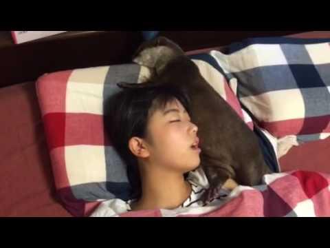 カワウソ劇場 それでも眠る強者(笑) - YouTube