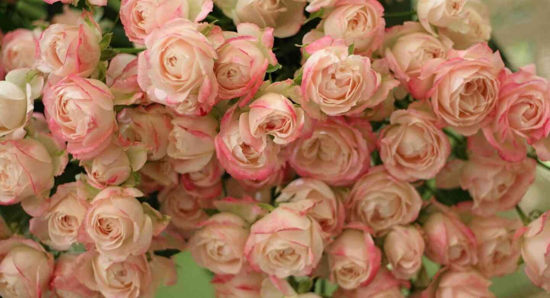 好きな人を思い浮かべながら薔薇の画像を貼るトピ