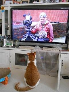 ネコ「が」見て楽しめる番組、NHKで放送決定! 関西地方で3月18日夜