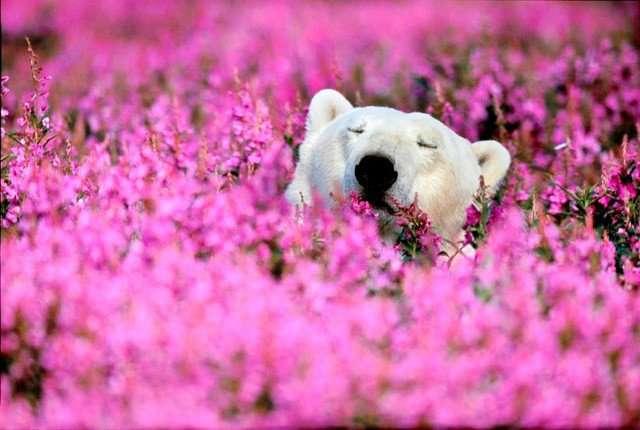 癒し画像トピ・花と動物