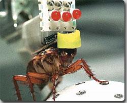 ゴキブリはオシッコをしない。その優れた代謝系統が明らかに : カラパイア