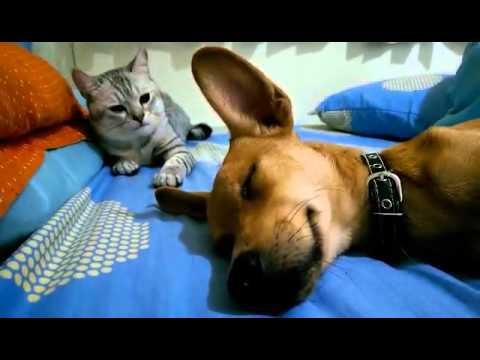 Cat Viciously Attacks Sleeping Dog - YouTube
