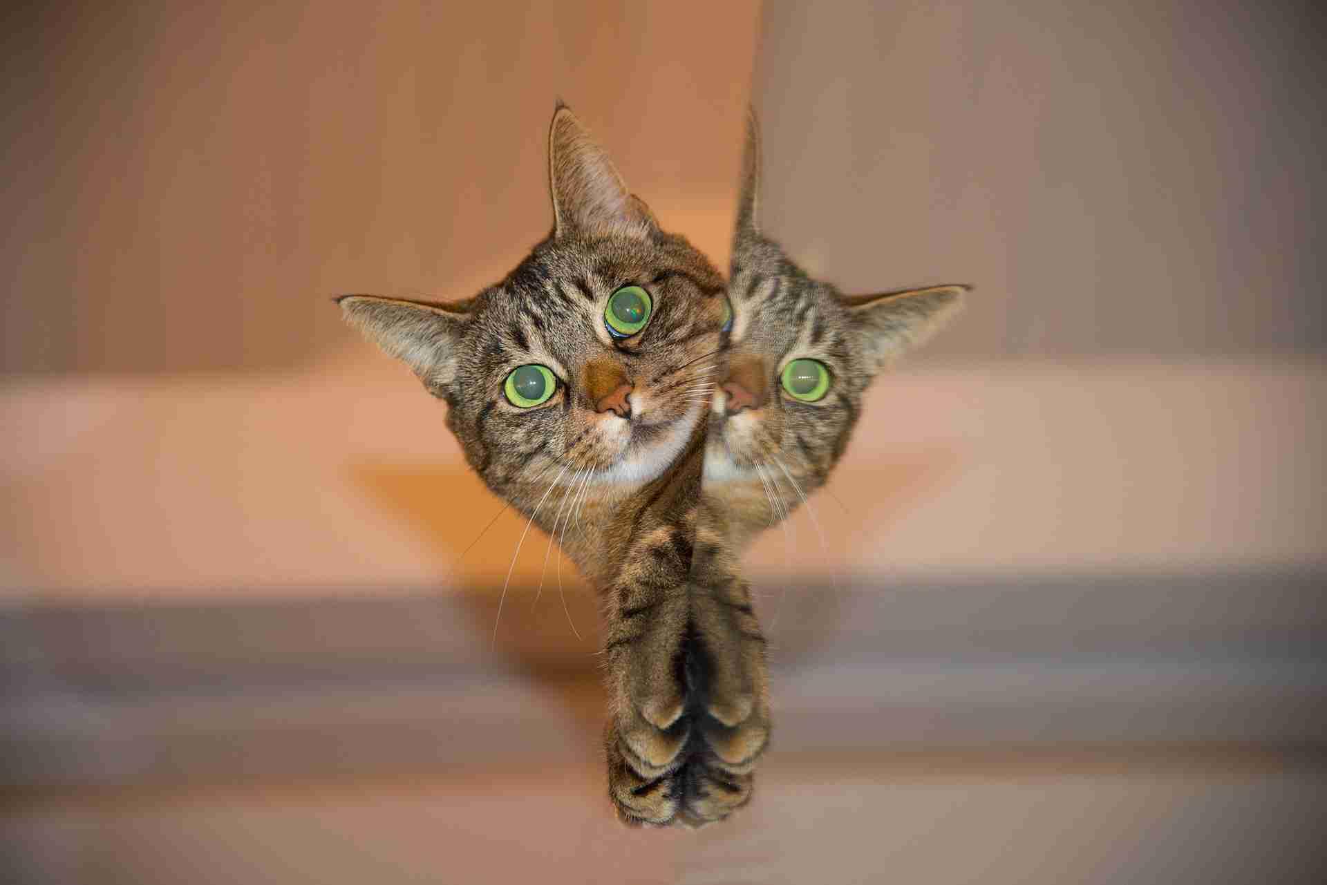 猫だって嫉妬する?その行動には深い意味があった!|猫の総合情報サイト ペットスマイルニュースforネコちゃん
