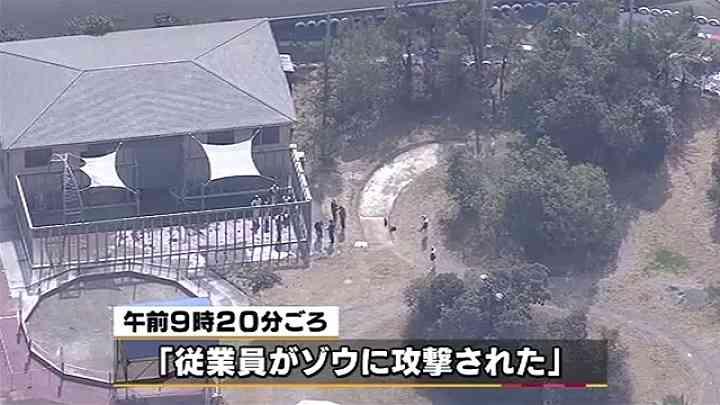 ゾウと接触し男性飼育員死亡、和歌山 News i - TBSの動画ニュースサイト