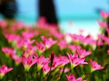 戦後70年。昭和天皇の御言葉「雑草という名前の草は無い…」から調べてみた「昭和の日」とは。
