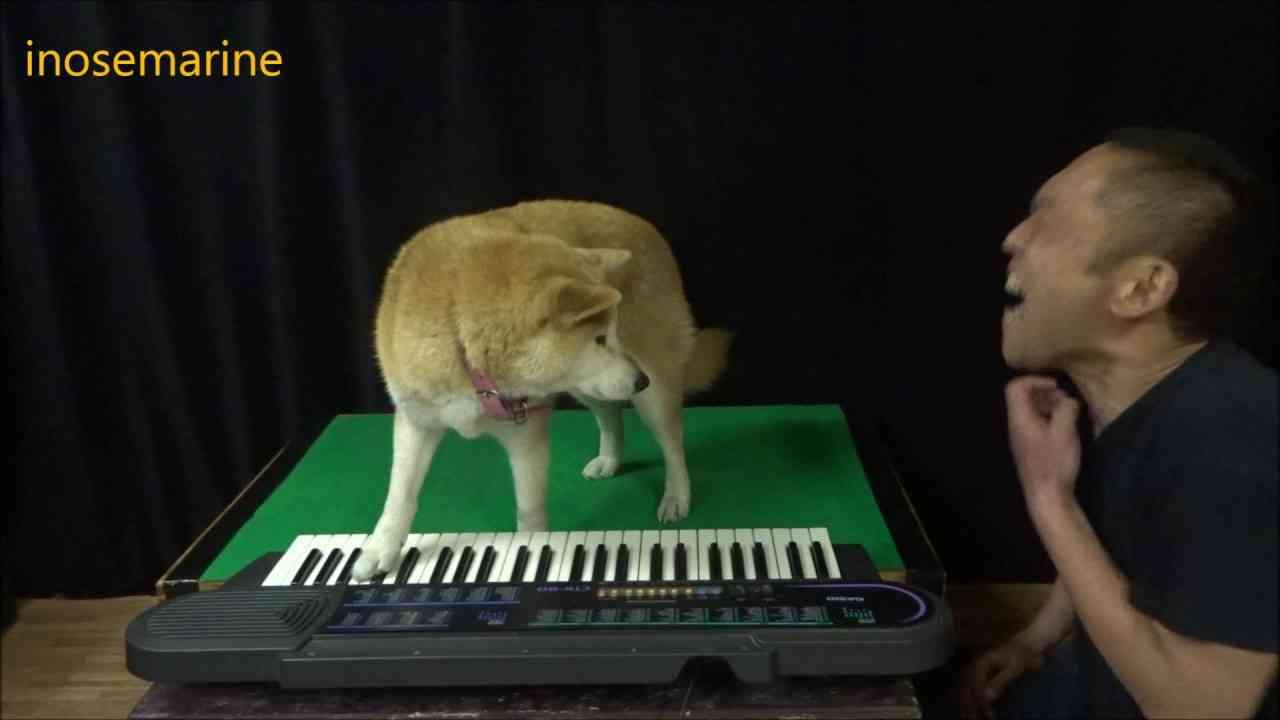 ボイトレ犬 - YouTube