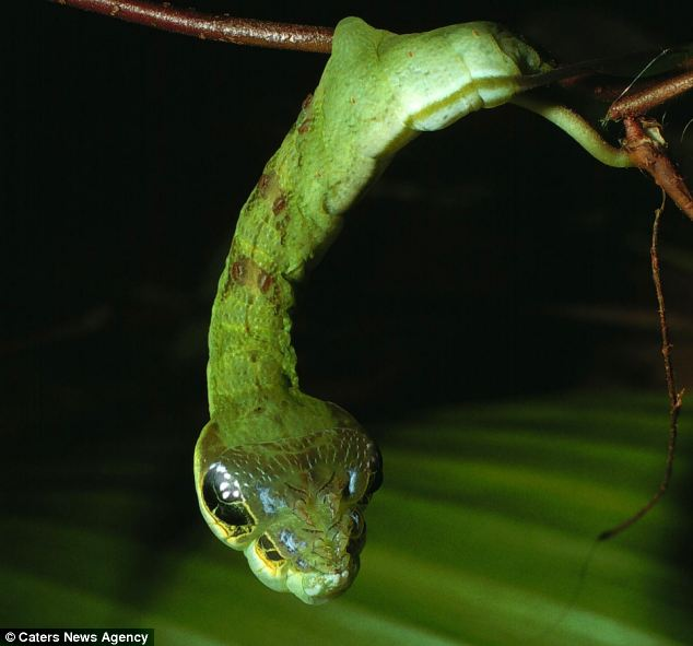 【閲覧注意】アルゼンチンで発見された謎生物の風貌が「ヤバ過ぎる」と話題に!新生物か?
