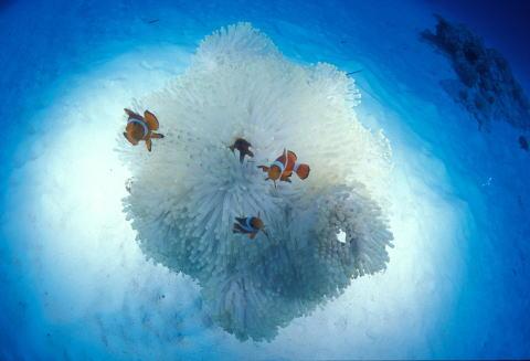 綺麗な海中の画像を貼るトピ