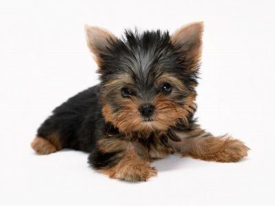 洗濯乾燥機での小型犬殺害事件、さらに衝撃の展開 オーストリア