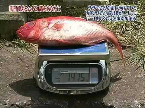 トリビアの種「サザエさんが追いかけている『お魚くわえたどら猫』は最大???kgの???までくわえる事が出来る」 - YouTube