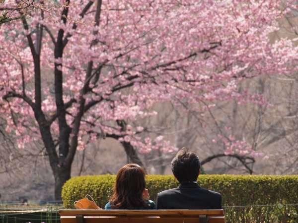【さくら】お花見デート【開花前線】